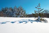 Inverno, a neve profunda e pegadas. — Fotografia Stock