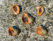 Shells and mollusks — Stock Photo