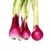 Bunch of young onions — Stock Photo