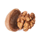 Walnut and shell — Stock Photo