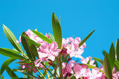 Pink flower's branch — Stock Photo