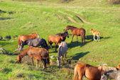 馬の群れ — ストック写真