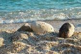 Tropical sand beach — Stock Photo
