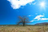 Ensamt träd — Stockfoto