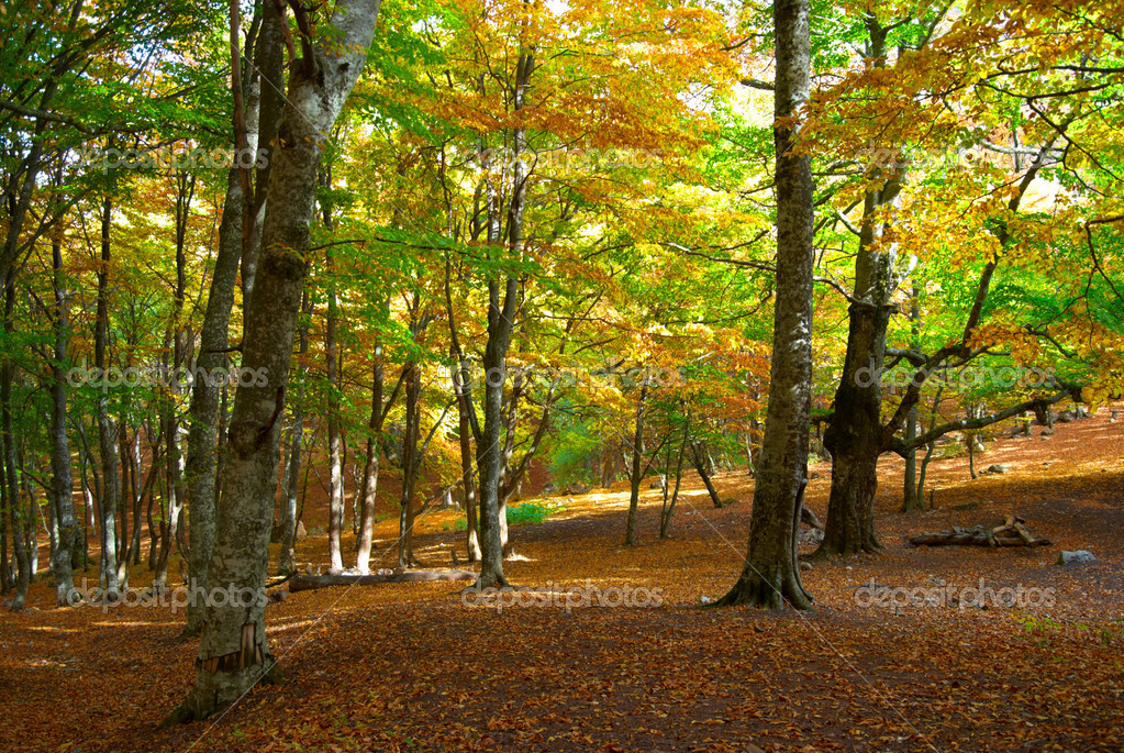 Autumn forest in the warm sunny day — Stock Photo #5921609