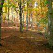 Autumn forest — Stock Photo #5998514