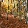 Autumn forest — Stock Photo #6055457