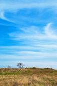 Un árbol en el campo — Foto de Stock