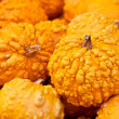 Orange Warted Gourds — Stock Photo #5418376