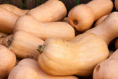 Butternut squash — Stock Photo