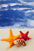 Starfish on the beach on blue sky background — Stock Photo