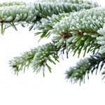Christmas tree — Stock Photo #6450165