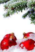 Christmas evergreen spruce tree and red glass ball — Stock Photo