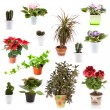 Set of potted plants — Stock Photo
