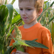 Boy stands in a corn field — Stock Photo #5459969