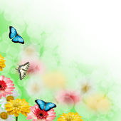 Multicolored flowers and butterflies — Foto de Stock