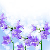Beautiful bluebells — Stock Photo