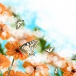 Orange gerberas and butterflies — Stock Photo