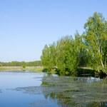 Beautiful summer landscap — Stock Photo #6065641