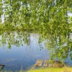 Beautiful summer landscap — Stock Photo #6065755