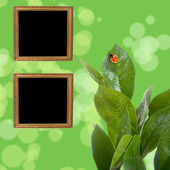 Wooden frames on a green — Stock Photo