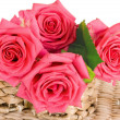 Stock Photo: Beautiful Roses