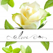 Decorative  card with rose flower — Stock Photo