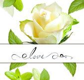 Tarjeta decorativa con flor color de rosa — Foto de Stock