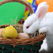 White beautiful rabbit, Easter bunny with eggs in basket — Stock Photo #6150266
