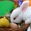 White beautiful rabbit, Easter bunny with eggs in basket — Stock Photo #6150267