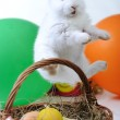 White beautiful rabbit, Easter bunny with eggs in basket — Stock Photo