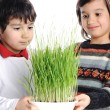 Two boys with green grass in hands — Stock Photo #6150514