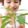 4-5-6 years old boy with green plant isolated on white — Stock Photo