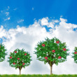 Concept of apple trees with sky behind — Stock Photo