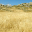 Yellow grass on the top of the mountain, background landskape — Stock Photo #6150853
