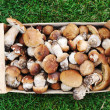 Collected natural forest mushrooms in box on grass — Stock Photo #6151343