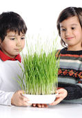 Two boys with green grass in hands — Stock Photo