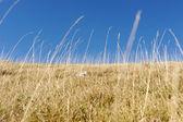Yellow grass on the top of the mountain, background landskape — Stock Photo