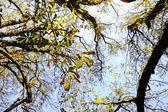 Fall, autumn, tree, arms, sky — Stock Photo