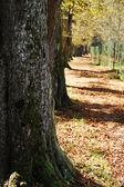 парк, деревья, осень, листья — Стоковое фото
