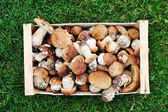 Collected natural forest mushrooms in box on grass — Stock Photo
