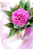 Love rose, for lover, on white — Stock Photo