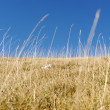 Yellow grass on the top of the mountain, background landskape — Stock Photo #6187361