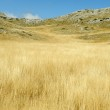 Yellow grass on the top of the mountain, background landskape — Stock Photo #6187364
