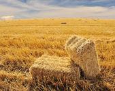 På fältet, slutar sommaren — Stockfoto