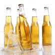 Bootles of beer with water splashes — Stock Photo #5716625