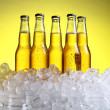 氷と寒さと新鮮なビールのボトル — ストック写真