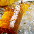 Bottles of cold beer lying in the ice. — Stock Photo