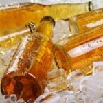 氷で横になっているビールのボトル — ストック写真