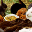Many different and cute rabbits — Stock Photo